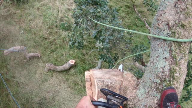 getting rid of dead wood - lumberjack stock videos & royalty-free footage