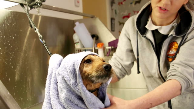 Getting Towel Dried At The Groomers