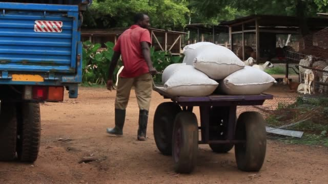 ghana has banned the sale and transport of live poultry after the h5n1 virus killed thousands of birds while there has been no record of human... - avian flu virus stock videos and b-roll footage