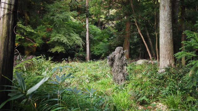 ghillie suit sniper in the jungle just standing - camouflage stock videos & royalty-free footage