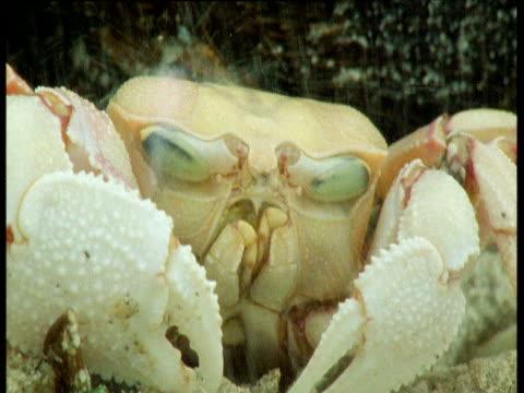 vídeos de stock, filmes e b-roll de ghost crab with eyes retracted in the rain - forma da água