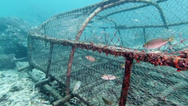geisternetzverschmutzung auf unterwasserkorallenriff entsorgt - fischereiindustrie stock-videos und b-roll-filmmaterial