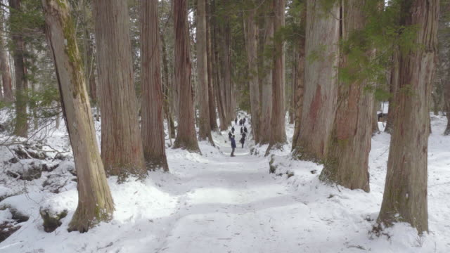 giant ancient cryptomeria trees in winter in nagano, chubu, japan, asia. - schrein stock-videos und b-roll-filmmaterial