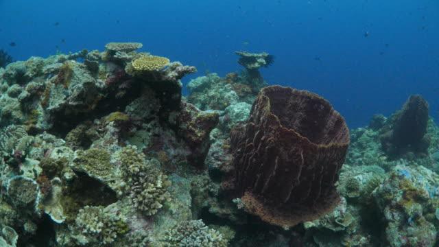 vídeos y material grabado en eventos de stock de esponja gigante de barril bajo superficie del mar - esponja