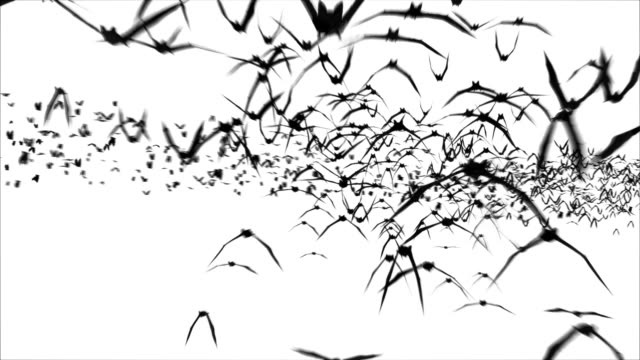 giant bat colony with alpha!  full hd & loopable - exhilaration stock videos & royalty-free footage