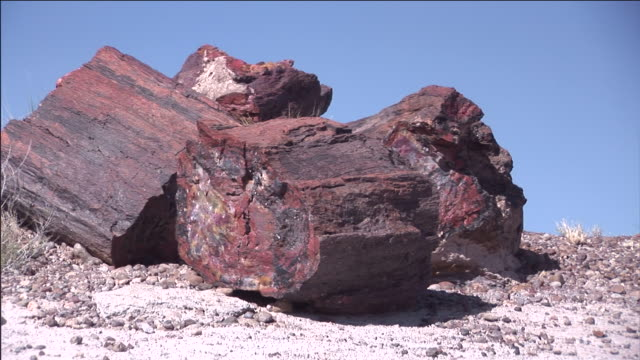 Giant chunks of petrified wood litter the desert of Petrified Forest National Park, Arizona.