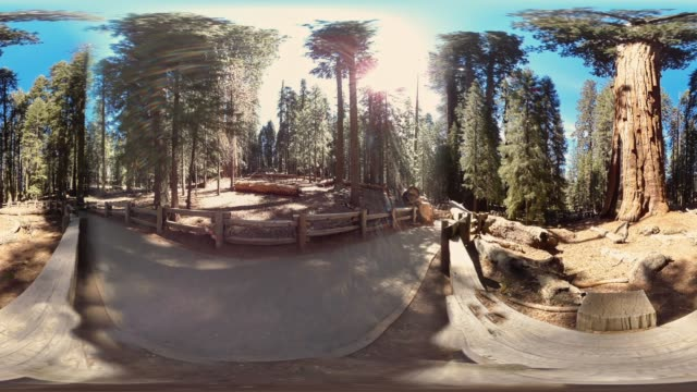 giant forest in sequoia national park california usa - lumberjack stock videos & royalty-free footage