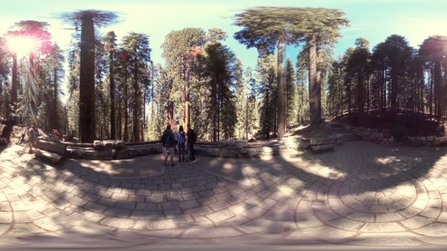 giant forest in sequoia national park california usa - sequoia stock videos & royalty-free footage