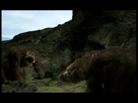 a giant ground sloth scares off another sloth. - mammal stock videos & royalty-free footage