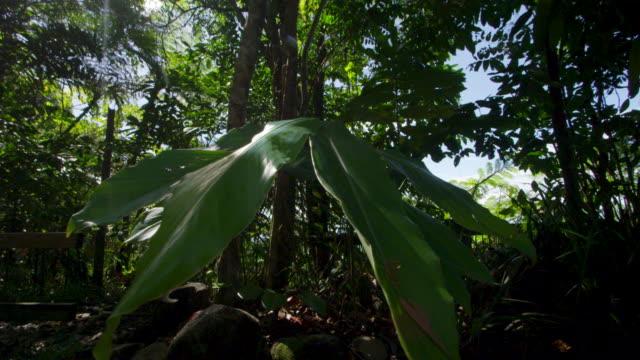 A giant leaf medium shot