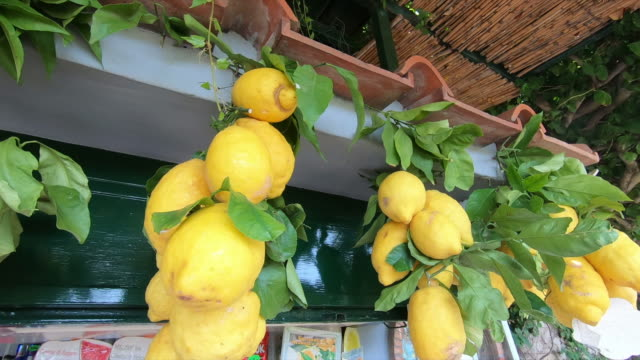giant lemons in capri island, italy, europe, mediterranean sea. - slow motion - citrus fruit stock videos & royalty-free footage