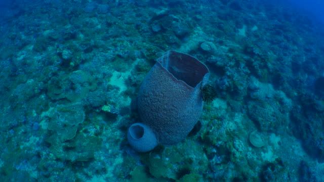 Giant marine sponge in coral reef
