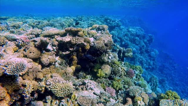 vídeos de stock e filmes b-roll de giant moray eel hidden on coral reef on red sea - moreia enguia de água salgada