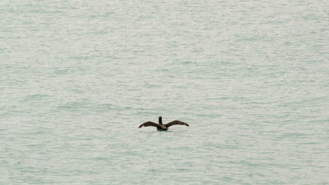 a giant southern petrel in flight - south stock videos & royalty-free footage