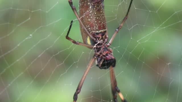 巨大なクモ - 動物の脚点の映像素材/bロール