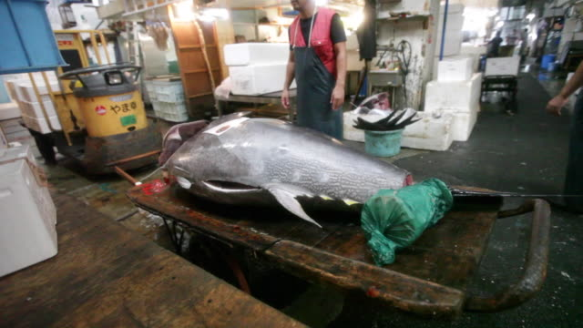 Giant tuna fish for sale at the Tsukiji Market in Tokyo