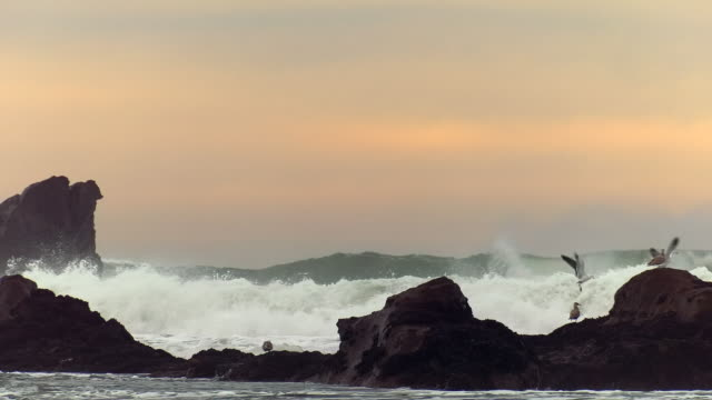 giant waves of pacific ocean - cliff stock videos & royalty-free footage