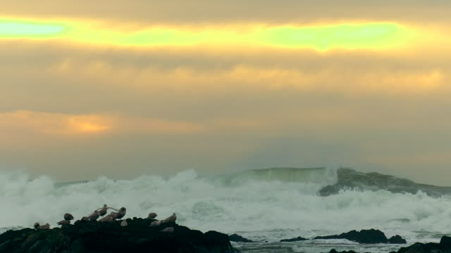 giant waves of pacific ocean - water's edge stock videos & royalty-free footage