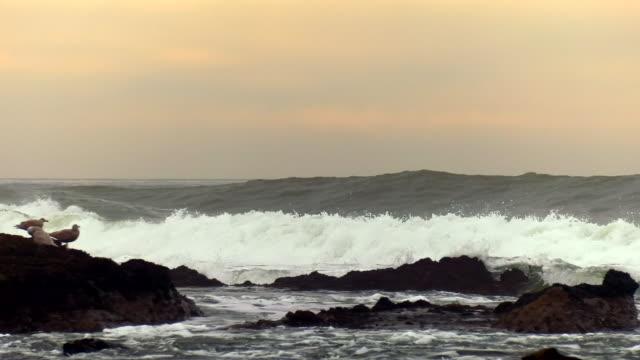 riesige wellen des pazifischen ozeans - wasserrand stock-videos und b-roll-filmmaterial