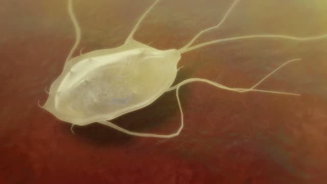 giardia trophozoite - flagello video stock e b–roll