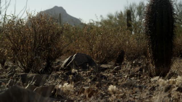 gila monster walks across desert floor - camouflage stock videos & royalty-free footage