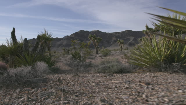 Gimbal shot of shrubs and yucca plants in a desert in Nevada