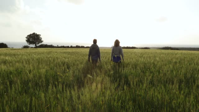 gimbal stabilizer view of couple walking through grain field - heterosexual couple stock videos & royalty-free footage