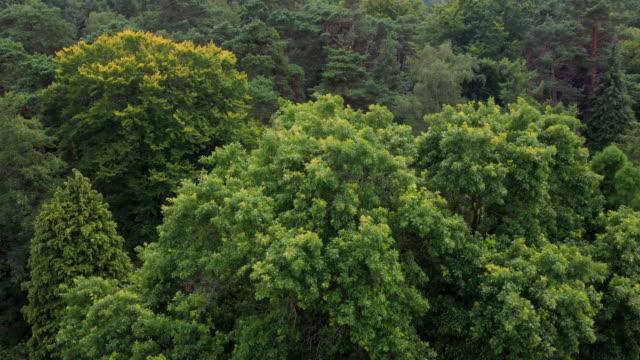 vídeos y material grabado en eventos de stock de gimborn forest in the netherlands - rama