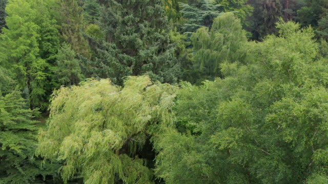 gimborn forest in the netherlands - utrecht stock videos & royalty-free footage