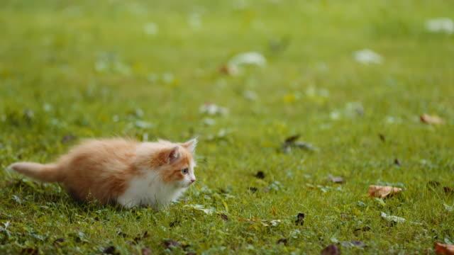 Ginger and white kitten in the garden