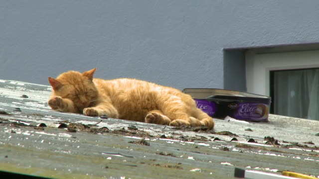 stockvideo's en b-roll-footage met ginger cat sleeping in the sun on a tin roof - dak