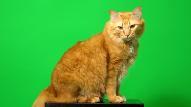ginger cat - green colour stock videos & royalty-free footage
