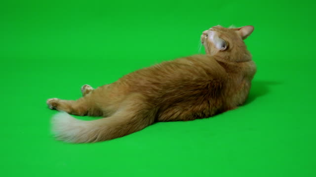 ginger cat - paw stock videos & royalty-free footage