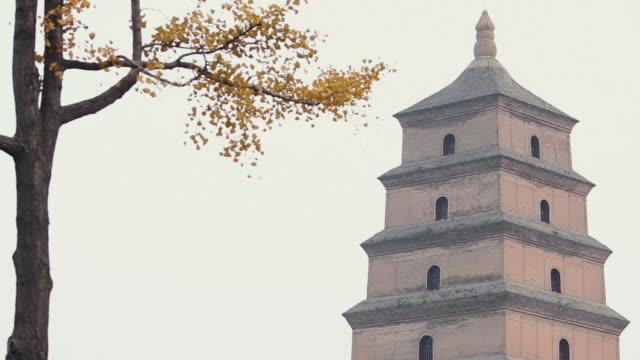 vídeos de stock, filmes e b-roll de ls gingko and pagoda roof levels/xian,shaanxi,china - ramo parte de uma planta