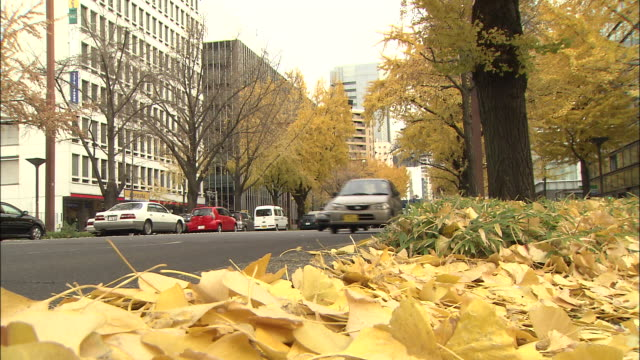 Ginkgo leaves flutter in the wind as many cars drive along a thoroughfare.