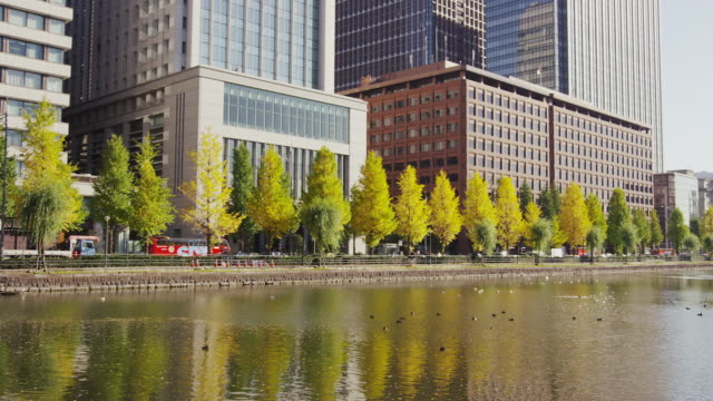ginkgo trees along imperial palace's moat in autumn - moat stock videos & royalty-free footage