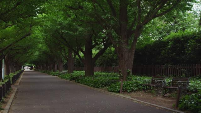 vídeos de stock e filmes b-roll de ginkgo trees at jingu gaien, tokyo, japan - banco de parque