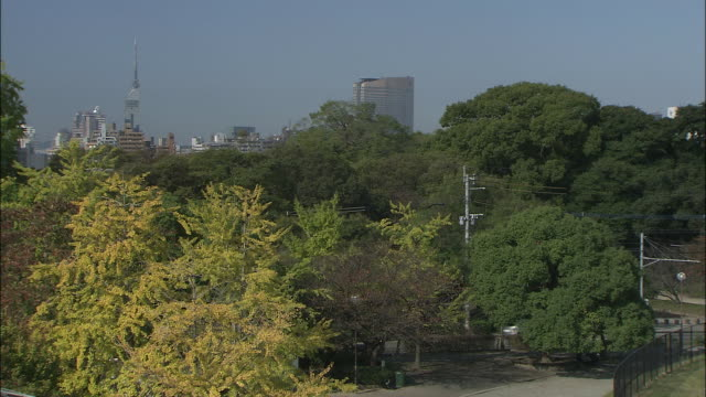 ginkgo trees populate maizuru park. - ginkgobaum stock-videos und b-roll-filmmaterial