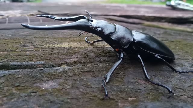 giraffe stag beetle - antler stock videos & royalty-free footage