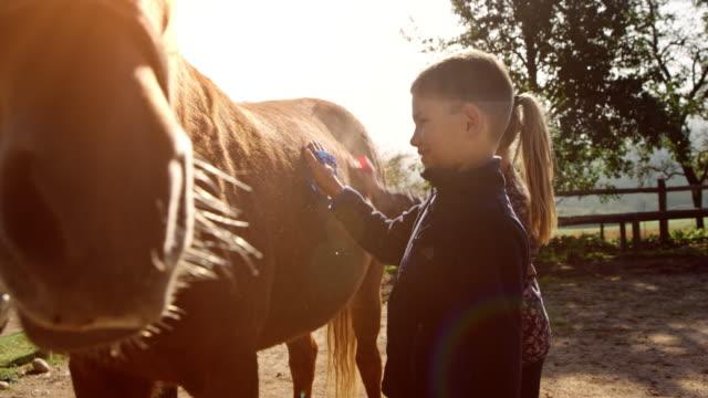 vídeos de stock e filmes b-roll de a girl and a boy brushing a horse in sunshine - cavalgar