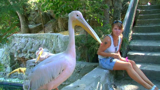 girl and a pelican - small group of animals stock videos & royalty-free footage