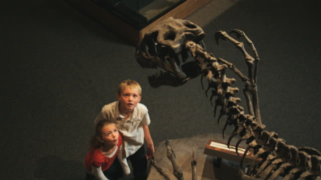 ms ha girl (8-9) and boy (10-11) in natural history museum, lehi, utah, usa - museo video stock e b–roll
