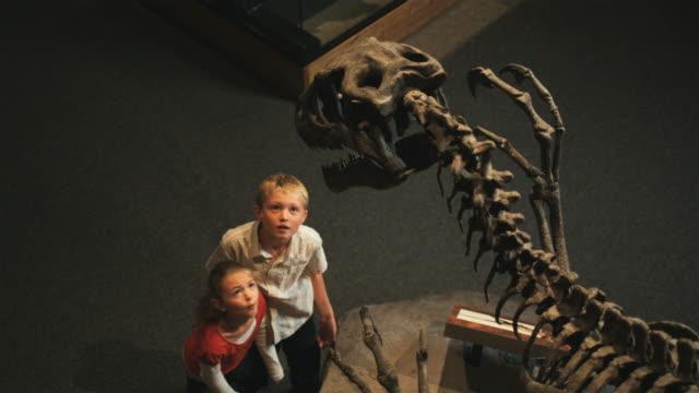 ms ha girl (8-9) and boy (10-11) in natural history museum, lehi, utah, usa - museum stock-videos und b-roll-filmmaterial