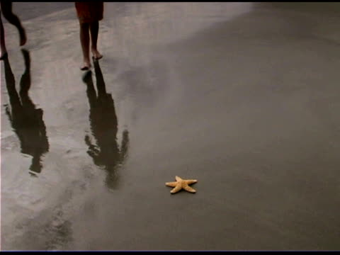 girl and boy with starfish on beach - see other clips from this shoot 1335 stock videos and b-roll footage