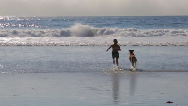 girl and dog playing in ocean - carmel california stock videos and b-roll footage