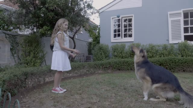 girl and dog playing with ball in yard - battere le mani esprimere a gesti video stock e b–roll