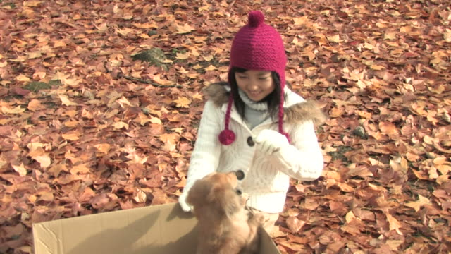 girl and dog - 8歳から9歳点の映像素材/bロール
