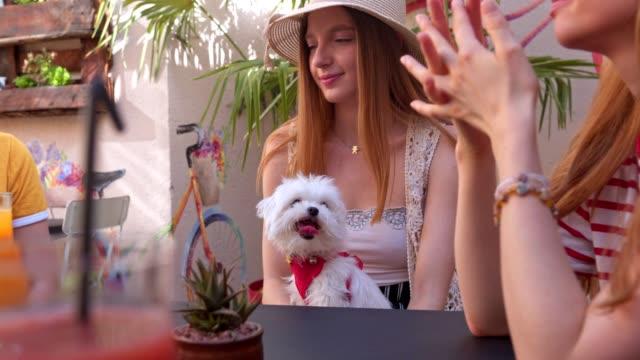 mädchen und ihr hund verbringen zeit zusammen in einem café - brustwarze stock-videos und b-roll-filmmaterial