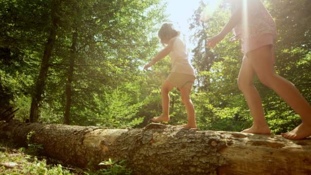 slo mo girl and her little sister walking on a trunk of a fallen tree lying on the forest ground in sunshine - tree trunk stock videos & royalty-free footage