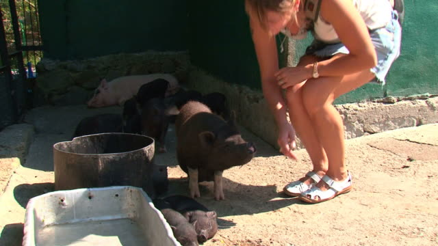 girl and piglets - stroking stock videos & royalty-free footage